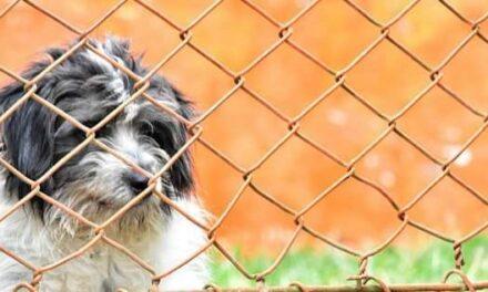 En Cali se construye el único Centro de Bienestar Animal del país