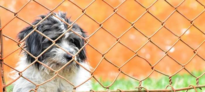 A comienzos de 2021 arranca la ejecución de obras del Centro de Bienestar Animal en Cali